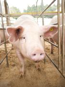 営業 ★畜産物の品質を決める飼料の提案|業界シェアトップクラスの飼料メーカー1