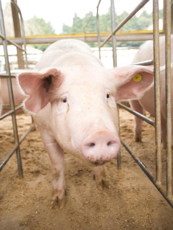 営業 ★畜産物の品質を決める飼料の提案|業界シェアトップクラスの飼料メーカーイメージ1