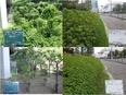 植栽管理スタッフ(木や草をキレイに整える仕事)◎未経験で月給22万円|家族手当あり|月8~10日休み3