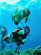 遊びが仕事で、仕事が遊び!ダイビングインストラクター ★未経験者歓迎 ★世界中の海に潜る仕事!