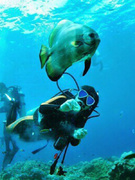 遊びが仕事で、仕事が遊び!ダイビングインストラクター ★未経験者歓迎 ★世界中の海に潜る仕事!1
