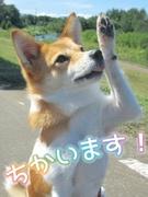 モバイルスタッフ★完休2日制!資格手当最大6万円!月収30万円以上も可能!Web面接対応可1