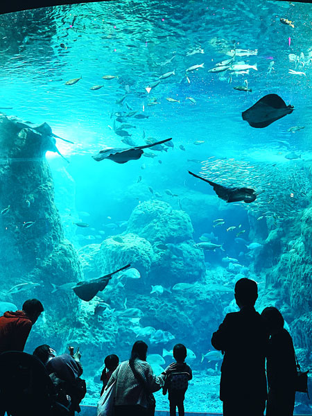『えのすい』の運営リーダー(「また来たくなる水族館」を作る司令塔) ★接客スキルが活かせます!イメージ1