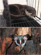 野生生物の保全プロジェクトオフィサー1