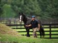 営業(競走馬の配合プランの提案など)■国内トップクラスの種牡馬繋養牧場3