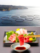 マグロの養殖加工スタッフ ◎長崎の離島「鷹島」で、釣りや海の幸を楽しむ毎日/U・Iターン支援アリ1