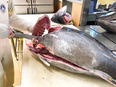 マグロの養殖加工スタッフ ◎長崎の離島「鷹島」で、釣りや海の幸を楽しむ毎日/U・Iターン支援アリ2