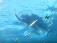 マグロの養殖加工スタッフ ◎長崎の離島「鷹島」で、釣りや海の幸を楽しむ毎日/U・Iターン支援アリ3
