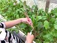 自社農場のスーパーバイザー ★農福連携を通した改革を目指し、障がいを持つ方の「働きたい」を叶える3