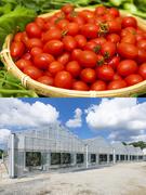 農場スタッフ 設立7年目の農業ベンチャー 事業成長率150% 家賃補助&社員寮あり UIターン歓迎1