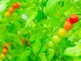 農場スタッフ 設立7年目の農業ベンチャー 事業成長率150% 家賃補助&社員寮あり UIターン歓迎2