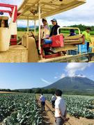 青果物の営業|生産者と消費者をつなぐ、JAグループの一員です。1