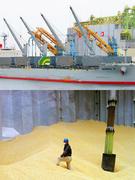 港湾作業スタッフ|輸入した穀物を港へ荷揚げする仕事など1