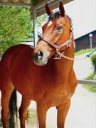 総合職(フロント・スクール担当・インストラクター)★日本最大級の乗馬クラブで乗馬と接客スキルを習得!1
