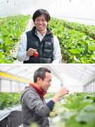 スーパーバイザー(イチゴ栽培の就農支援事業)│『ガイアの夜明け』にも取り上げられました。1