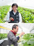 イチゴの営業(就農支援を通じ、宮城県の復興を支える会社です)★U・Iターン支援あり!1