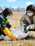 希少種保全担当(環境省職員)|国の事業として絶滅危惧種の保全を主導します。1