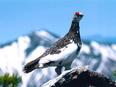 希少種保全担当(環境省職員)|国の事業として絶滅危惧種の保全を主導します。3